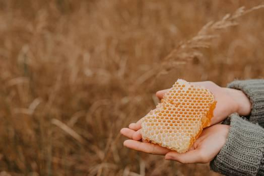Corn Kernel Grain #423458