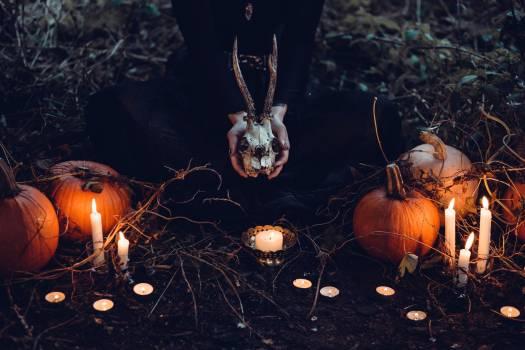 Pumpkin Lantern Halloween #423538