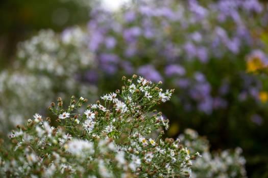 Spirea Herb Vascular plant #423540