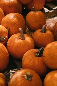 Pumpkin Vegetable Produce #423553