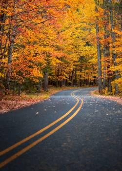 Bend Road Landscape #423587