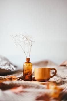 Tea Cup Drink #423680