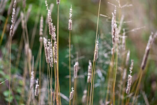 Horsetail Fern ally Vascular plant #423748