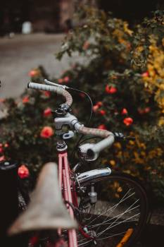 Moped Minibike Motorcycle #423807