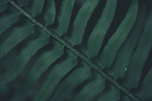 Plant Tree Woody plant #424087
