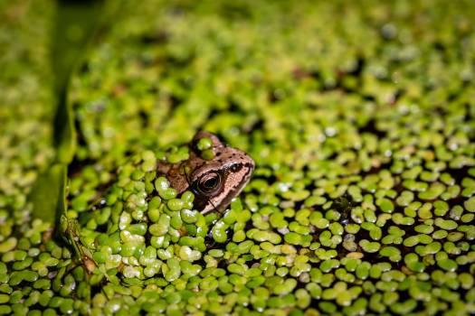Frog Green Wild Free Photo Free Photo