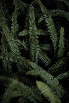 Feather star Echinoderm Fern Free Photo