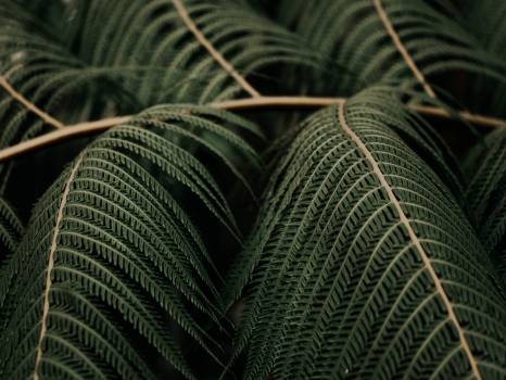 Fabric Wool Thread Free Photo