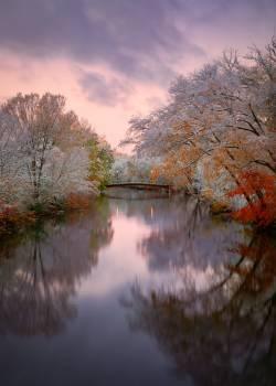 Landscape Tree River #424473
