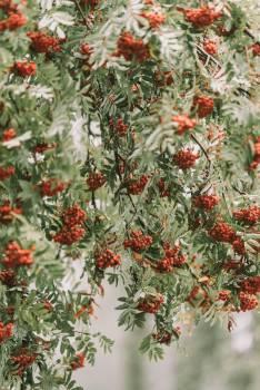 Shrub Woody plant Vascular plant #424513