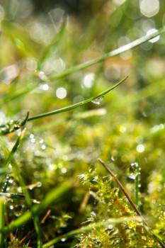 Dew Drop On Grass #424530