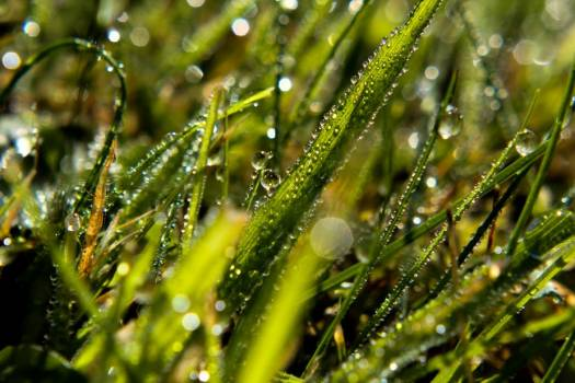 Morning Dew On Blades Of Grass #424531