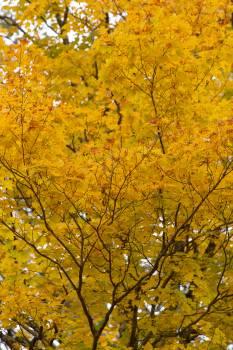 Tree Woody plant Vascular plant #424589