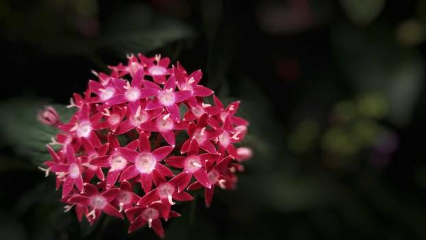 Cluster Of Bright Pink Flowers #424632