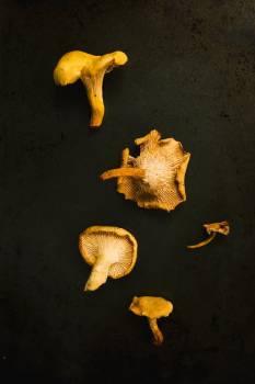 Yellow Mushrooms On Black #424634