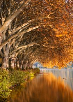 Tree Forest Autumn Free Photo