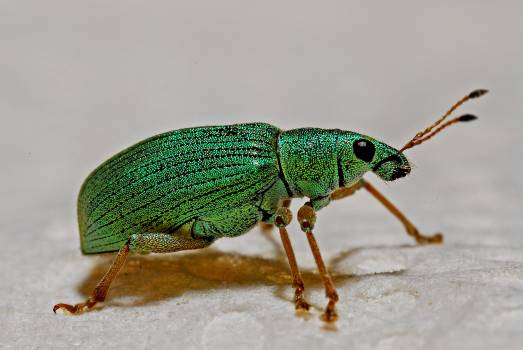 Green Black and Brown Insect #42483