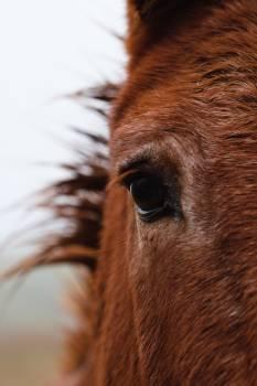 Horse Sorrel Farm #424944