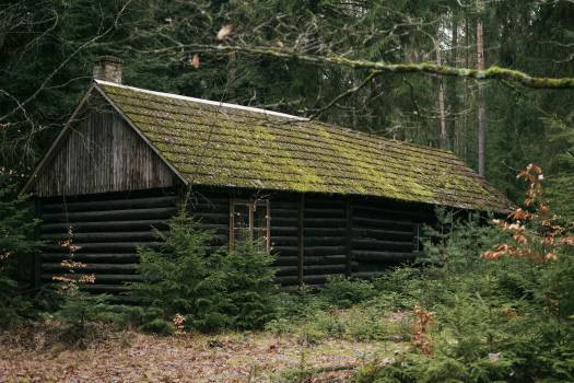 Magical Abandoned Cabin in Woods - Free Image For Commercial Use Free Photo