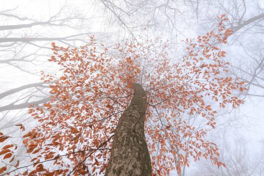 Tree Snow Winter Free Photo