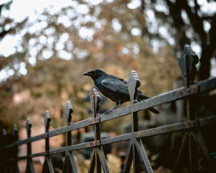 Quail Bird Game bird #425061
