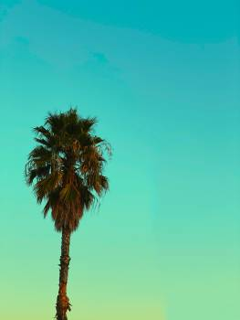 Palm Tree Sky Free Photo