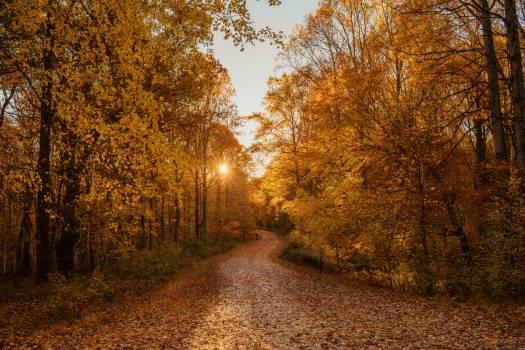Tree Autumn Forest #425100