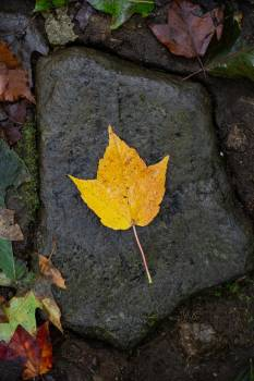 Lone Autumn Leaf Free Photo #425113