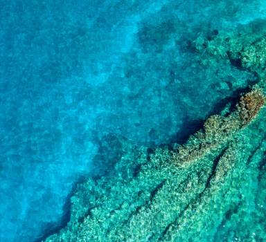 Overhead View Of Pristine Coral Reef #425166