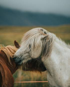 Animal Horse Mammal Free Photo