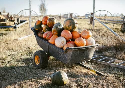 Pumpkin Squash Vegetable #425195