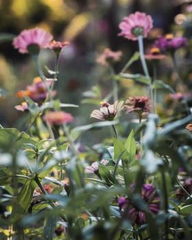 Plant Vascular plant Herb #425208