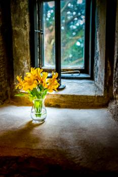 Flower Vase Window Free Photo #425248