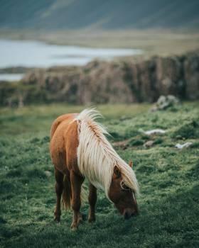 Horse Horses Pasture #425299