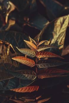 Shrub Woody plant Vascular plant #425310