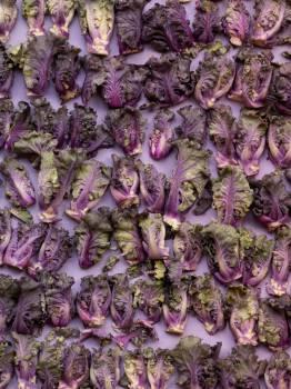 Herb Plant Vascular plant #425331