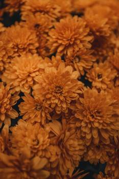 Flower Petal Plant #425548