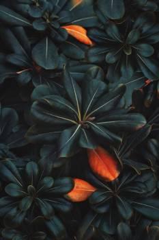 Plant Pattern Vascular plant #425562