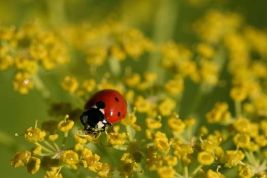 Ladybug Insect Beetle #425647
