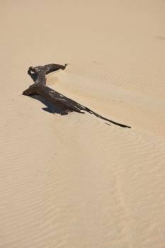 Kite Hawk Bird Free Photo