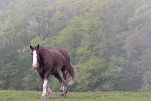 Horse Pasture Equine Free Photo #425705