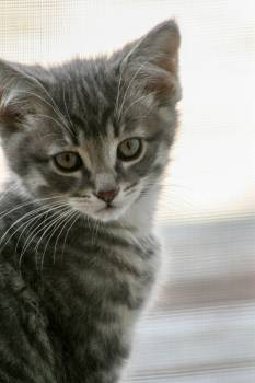 Kitten Cat Feline Free Photo