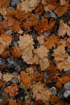 Jigsaw puzzle Autumn Texture #425728