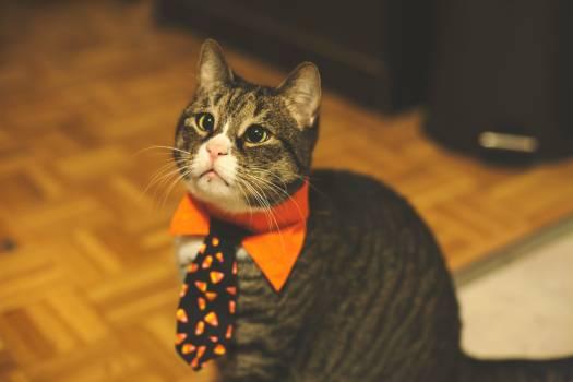 Cat Kitten Feline #425808