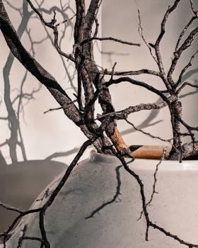 Tree Branch Sky #425816