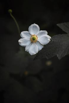 Herb Vascular plant Plant #425852