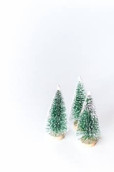 Decoration Fir Tree Free Photo