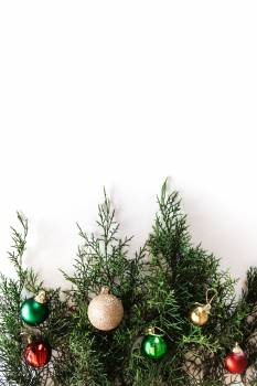 Evergreen Tree Pine #425902