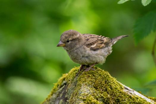 Grey and White Small Bird on Grey Moss Covered Rock Tilt Screen Photography #42590