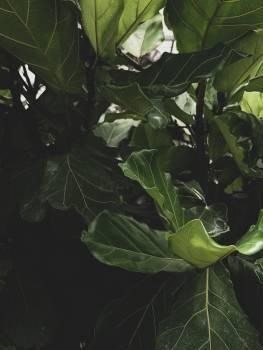 Tree Plant Woody plant #425912